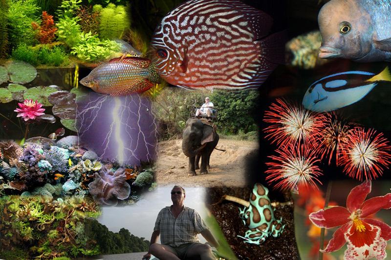 10x Vijver Inspiratie : Lezing terrariumwereld